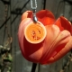 simple pendant, paper jewelry, paper quilling jewelry, orange jewelry, handmade