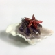 purple seashell, sea green seashell, beach fashion, beach style, summer fashion
