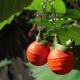 halloween pumpkin earrings, halloween earrings, paper quilling earrings